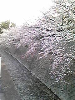DVC00354.jpg